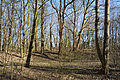 Schleswig-Holstein, Kellinghusen, Naturerlebnisraum Rensinger See NIK 1798.JPG