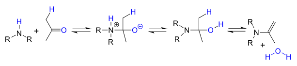 enamine formation by reaction of amine with carbonyl