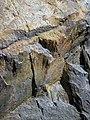 Shatterconed sandstone (Mississagi Formation, Paleoproterozoic, ~2.3-2.4 Ga; Ramsey Lake Road outcrop, Sudbury, Ontario, Canada) 106 (40801936633).jpg