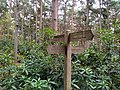 Sign post in Rushmere Country park.jpg