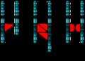 Single Chromosome Mutations.png