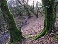 Sloughan Glen - geograph.org.uk - 1176745.jpg