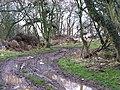 Small woodland, Ravelaw - geograph.org.uk - 339163.jpg