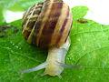 Snail 2741.JPG