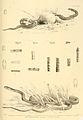 Snakes by Albert Gunther (7).jpg