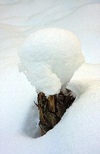 Snow RB.jpg