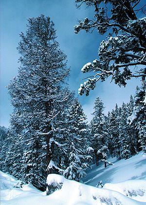 Snow in Colarado in the United States of America.jpeg