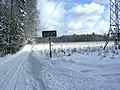 Sopot – winter forest.JPG