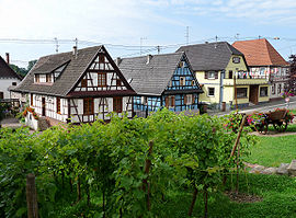 Half-timbered houses and vineyards in Soufflenheim