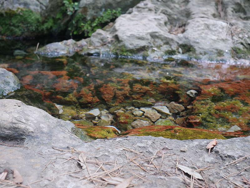 Source of water on the 'sentier des Encanaux' in Auriol, département des Bouches du Rhône in France.