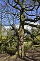 Specimen aux vieilles branches (26368139546).jpg