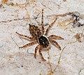 Spider September 2007-1.jpg