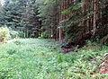 Spodnje Gorje Slovenia - Meadow 1 Mass Grave.JPG