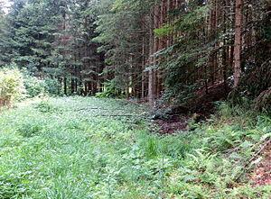 Spodnje Gorje - Image: Spodnje Gorje Slovenia Meadow 1 Mass Grave