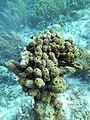 Sponges Crazy Sponge Formation (7157549063).jpg