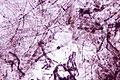 Spores4.jpg