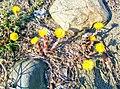Spring flowers - panoramio.jpg