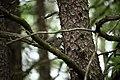 Squirrel-hiding-branch-tree - West Virginia - ForestWander.jpg