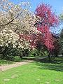 Stadtpark Hamburg im Mai 2.NNW.jpg