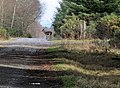 Stag crossing Forest Track - geograph.org.uk - 719713.jpg