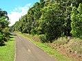 Starr-060503-8062-Lophostemon confertus-hedge-Pololei Haiku-Maui (24863161135).jpg