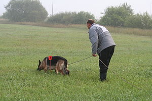Schutzhund - Starting the tracking phase