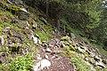 Stones on trail 2.jpg