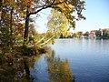 Straussee - Westl. Ufer (Western Bank) - geo.hlipp.de - 29661.jpg