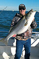 Striped Bass aka Rock Fish January 2012.jpg