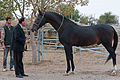 Studfarm in Turkmenistan - Flickr - Kerri-Jo (8).jpg