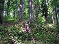 Stuzica forest.JPG