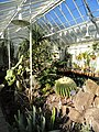 Succulent House - Lyman Plant House, Smith College - DSC04296.JPG
