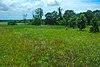 Summerton Bog 2.jpg