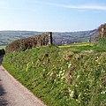 Sunken Lane with Primroses - geograph.org.uk - 398376 (cropped).jpg