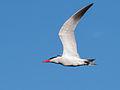 Sunny Terns.jpg