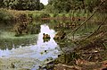 Swamp (28785612724).jpg