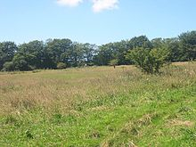 Sylvia's Meadow - geograph.org.uk - 34657.jpg