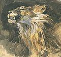 Tête de lion rugissant.jpg