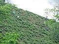 Tea plantation (7168541731).jpg