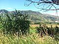 Tepelena - panoramio.jpg