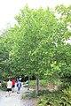 Terra Botanica 2017.08.23 Angers 104.jpg