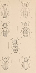 The British Coleoptera delineated (1840) (19794850844).jpg