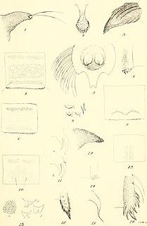 John Russell Malloch Scottish-born US entomologist