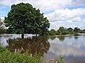 The Loddon floodplain, Sindlesham - geograph.org.uk - 504344.jpg