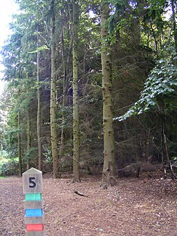 The Nature Trail, Home Park, Hatfield House - geograph.org.uk - 567204