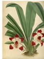The Orchid Album-01-0053-0017.png
