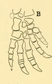 The Osteology of the Reptiles-190 jhgv jh jh uhyg.png