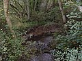 The River Derwent - geograph.org.uk - 1506966.jpg