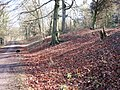 The Woodland Track on the north side of Boddington Banks - geograph.org.uk - 1188537.jpg