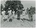 The family of Mr. Leroy Dunn, chopping cotton in a rented fi... (3110582208).jpg
